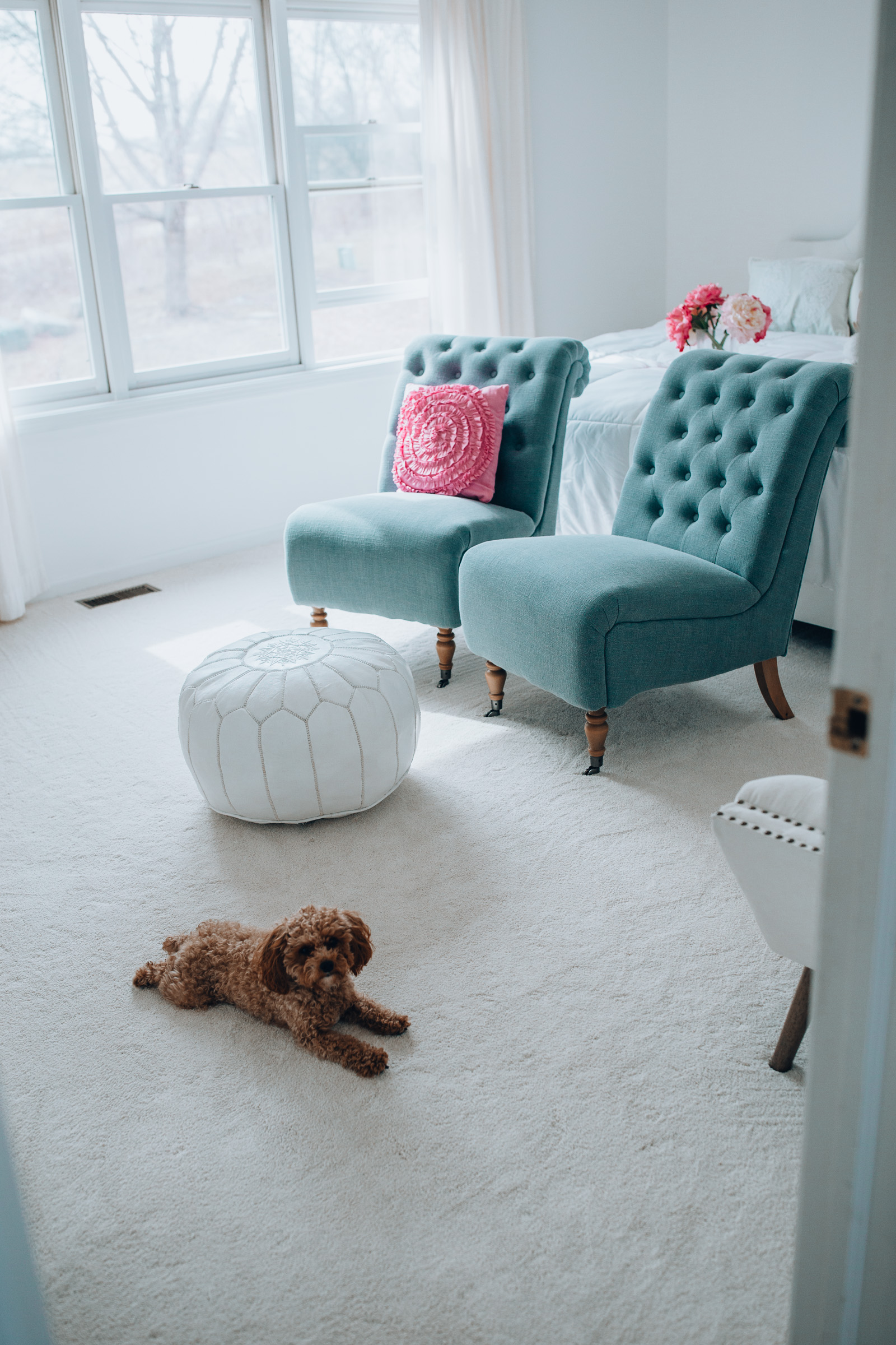 The carpet every pet owner needs in their home! The PetProof carpet is easy to clean, and is such a stylish accessory! | Chicago lifestyle blogger